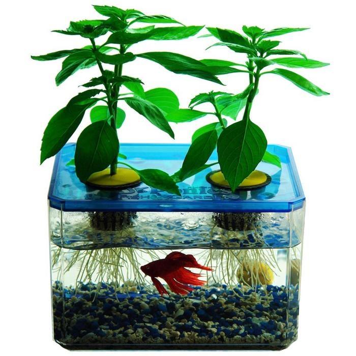Go green go green for Hydroponic fish tank diy